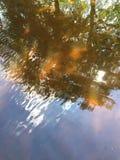 In de schaduw gestelde bomen Stock Foto