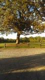 in de schaduw gestelde eiken boom in het land Stock Afbeelding