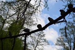 In de schaduw gestelde vogels van een boom Royalty-vrije Stock Fotografie