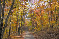 In de schaduw gestelde Weg in het Bos in de Herfst stock afbeeldingen