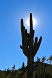 De Schaduw van Arizona Royalty-vrije Stock Fotografie