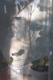 De schaduw van de bloemen op het gordijn Stock Afbeelding