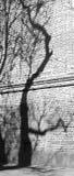 De schaduw van de boom Stock Afbeeldingen