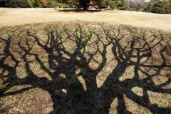 De schaduw van de boom `s Royalty-vrije Stock Afbeeldingen