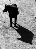 De schaduw van de hond stock afbeeldingen