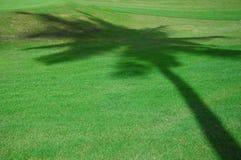 De Schaduw van de kokosnoot op Green Stock Afbeelding