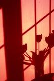 De schaduw van de muur van tulpen Royalty-vrije Stock Foto's