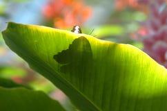 De Schaduw van de vlinder Stock Afbeeldingen