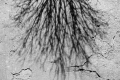 De schaduw van dode boom Stock Foto's