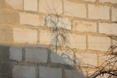 De schaduw van een boom op een bakstenen muur Zonnige dag, afdruk van werkelijkheid spel van schaduwen en licht Breking van licht royalty-vrije stock afbeeldingen
