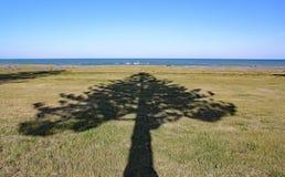 De schaduw van een boom richt aan het overzees in Napier op het Noordeneiland, Nieuw Zeeland royalty-vrije stock afbeelding