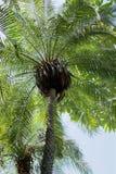 De schaduw van een Palm Stock Fotografie
