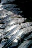 De schaduw van Fishermens op vissen Royalty-vrije Stock Fotografie