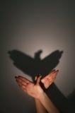De schaduw van het silhouet van adelaar stock afbeeldingen