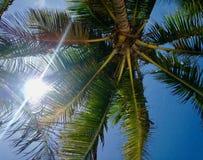 In de schaduw van de mooie kokospalmen royalty-vrije stock afbeelding