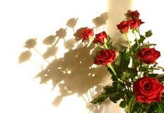 De schaduw van rozen stock afbeeldingen