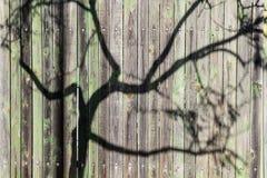 De schaduw van de takken van een boom op een oude groene houten omheining wordt ontworpen die royalty-vrije stock fotografie