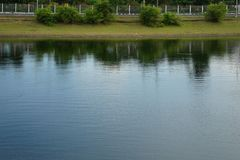 De schaduwen denken van kust van groen boom en gras na stock fotografie