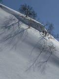 De schaduwen van bomen op sneeuw Stock Afbeelding