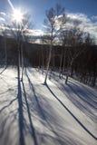 De Schaduwen van de boom in Sneeuw Royalty-vrije Stock Afbeelding