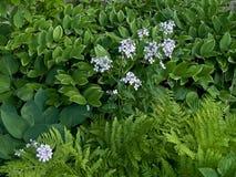 De Schaduwen van de lente van Groen Stock Afbeeldingen