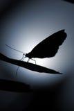 De schaduwen van de vlinder Stock Foto