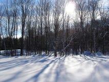 De Schaduwen van de winter Stock Foto's
