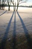 De schaduwen van de winter Stock Foto