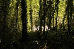 De schaduwen van Forrestbomen stock foto's