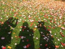 De reis van de herfst Stock Foto's
