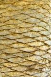 De Schalen van de palm royalty-vrije stock fotografie