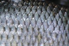 De schalen van vissen Royalty-vrije Stock Afbeeldingen