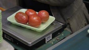 De schalen van vrouwentribunes neemt tomaten van plastic doos zet op platform stock video