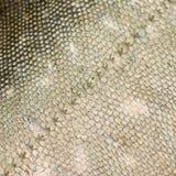 De schalentextuur van vissen #1 Stock Foto