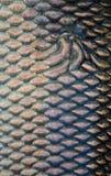 De schalentextuur van vissen Stock Afbeelding