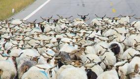De schapen stock afbeelding