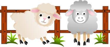 De schapen op het landbouwbedrijf Royalty-vrije Stock Afbeeldingen