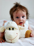 De schapen van de baby Royalty-vrije Stock Foto's