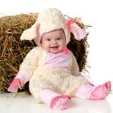 De Schapen van de baby Stock Foto's