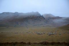 De schapen van de kasteelheuvel stock fotografie