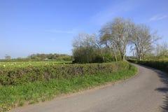 De schapen weiden in het Engelse platteland Royalty-vrije Stock Foto