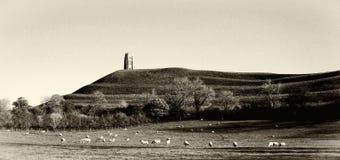 De schapen weiden vreedzaam bij Glastonbury-Piek in Somerst Engeland stock afbeeldingen