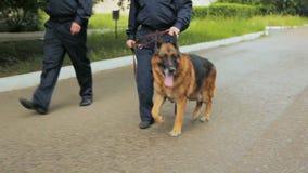 De schapenhond helpt het parkgrondgebied van de politieagentenpatrouille stock video