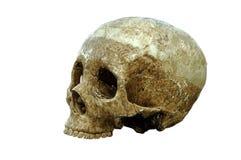 De schedel Stock Foto's