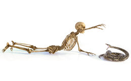 De schedel en de slang Royalty-vrije Stock Afbeeldingen