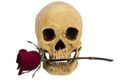 De schedel met nam toe Stock Afbeeldingen