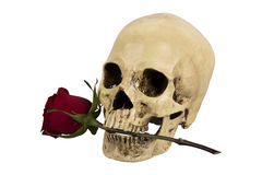 De schedel met nam toe Stock Foto's