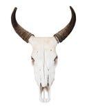 De schedel van buffels Royalty-vrije Stock Afbeeldingen