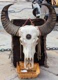 De schedel van buffels Royalty-vrije Stock Afbeelding