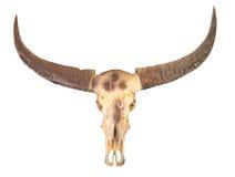 De schedel van buffels Royalty-vrije Stock Foto's